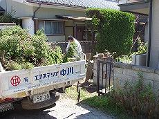 生垣 伐採2